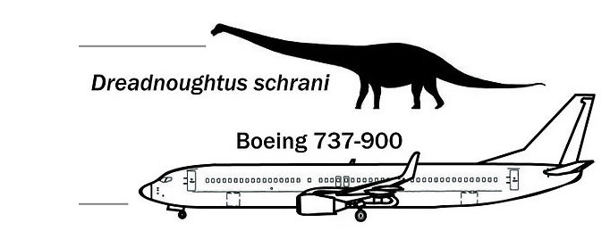 Dreadnoughtus Schrani compared to 737-900