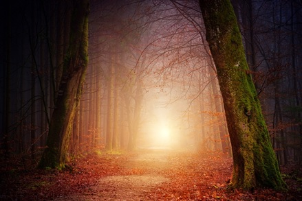 The sun shining low through autumn woodland path at breaking of dawn